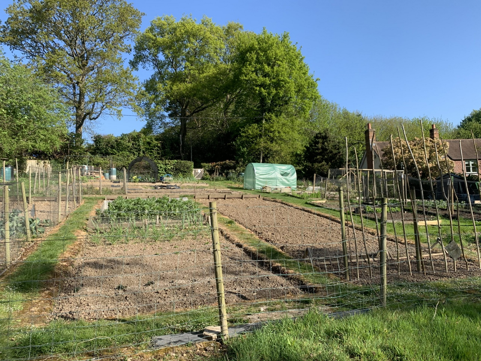 Several allotments are showing with canes and netting on the plots.