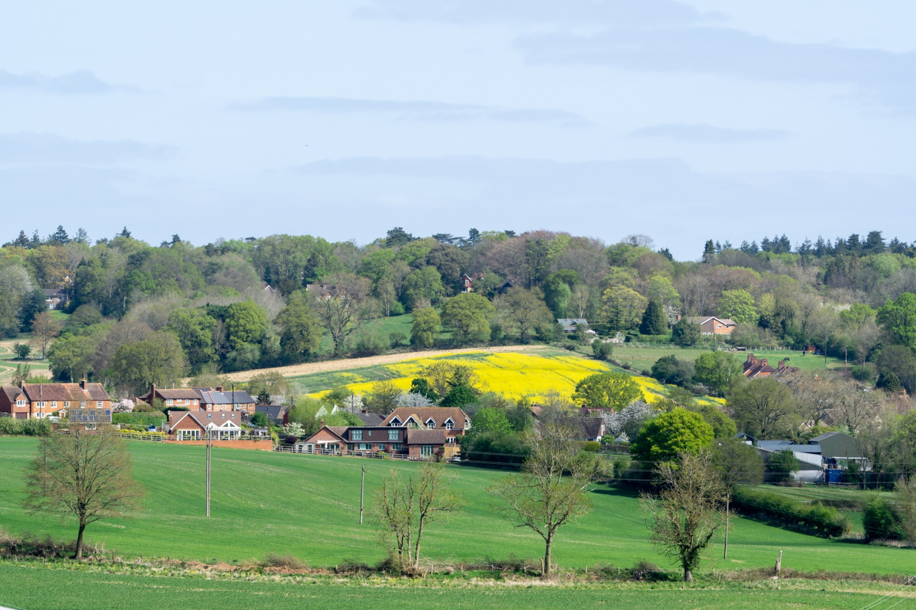 A wide vista with green rolling countryside. Ashmore Green houses sit in front of a yellow Rape Seed field.