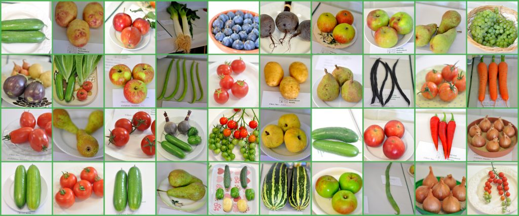 A display of vegetablesles from a Cold Ash Horticultural Society show.
