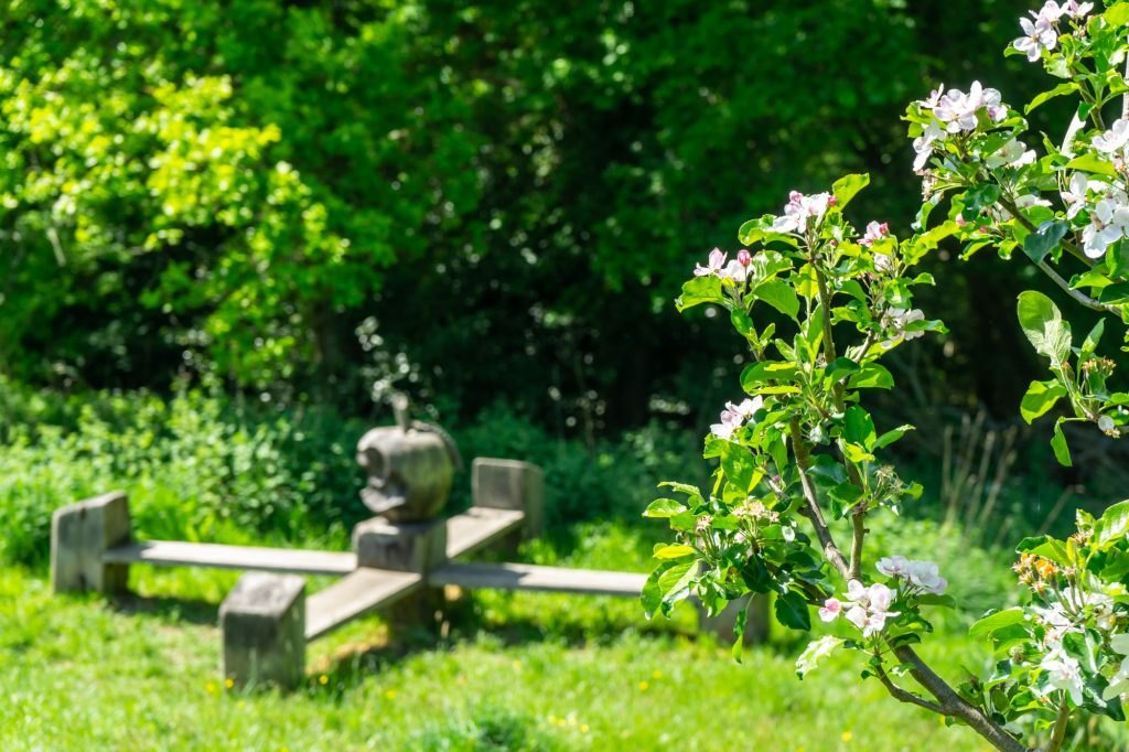 An Apple tree with blossom is in the foreground. In the background a bench can be see with a carved wooden apple sitting on top. The carved apple has a bite taken out of it.